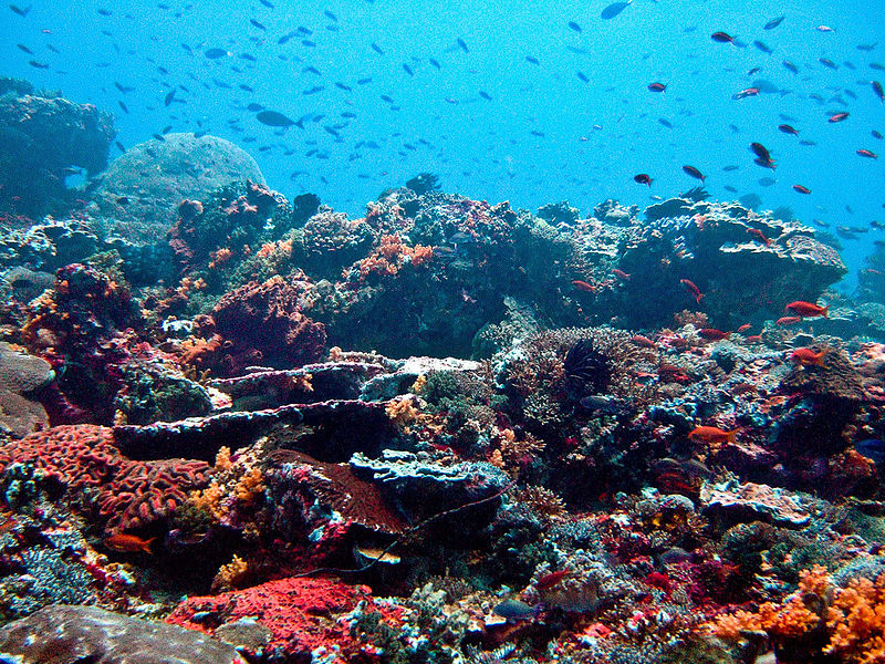 800px-Nusa_Lembongan_Reef